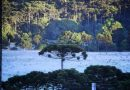 Geada volta a surgir em pleno Dezembro na Serra Catarinense