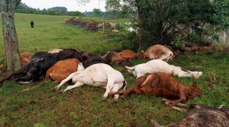 Raio mata rebanho no norte do Rio Grande do Sul
